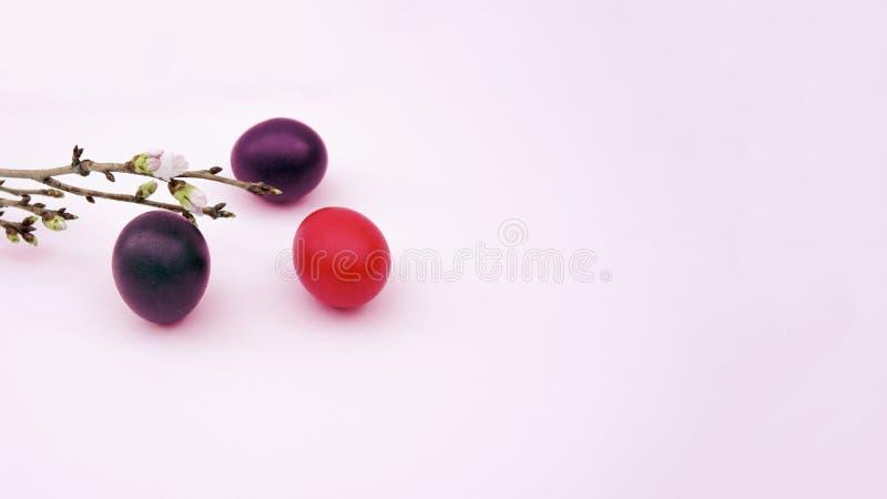 三个明亮的色的复活节彩蛋,樱桃分支 库存照片
