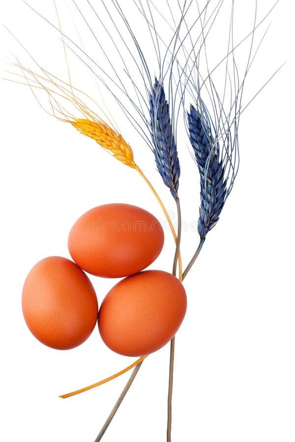 三棕色或红色鸡蛋和被隔绝的装饰麦子耳朵白色背景 免版税图库摄影