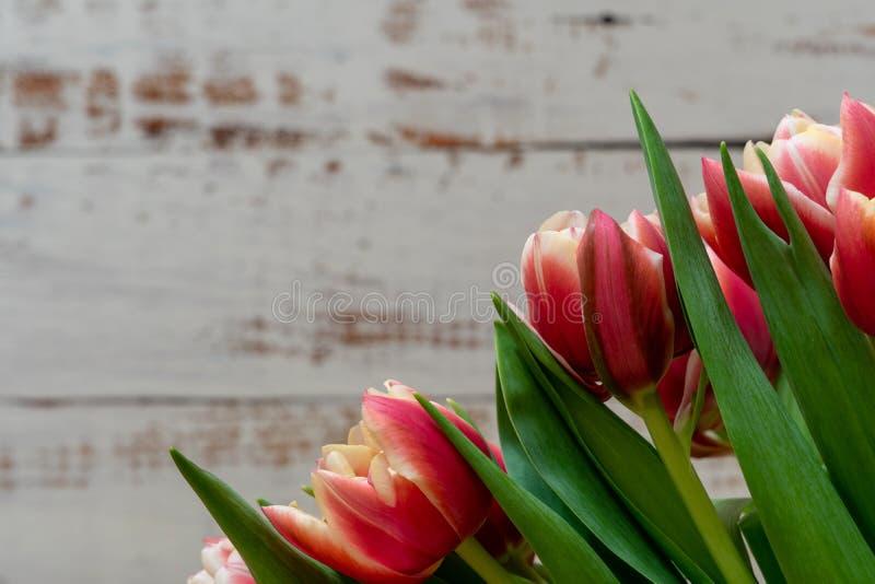 下雨 红色和橙色郁金香花束在白色木背景的 免版税图库摄影