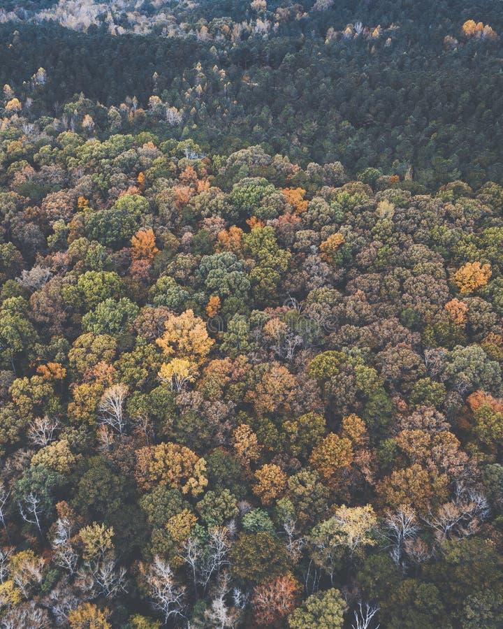 一个多彩多姿的森林的寄生虫图象在有秋叶的美国东南 免版税库存照片