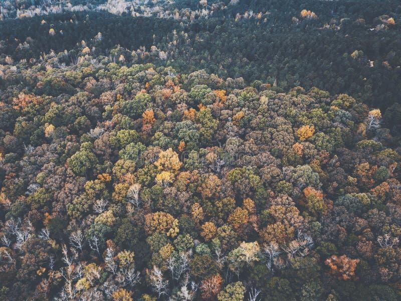 一个多彩多姿的森林的寄生虫图象在有秋叶的美国东南 库存照片