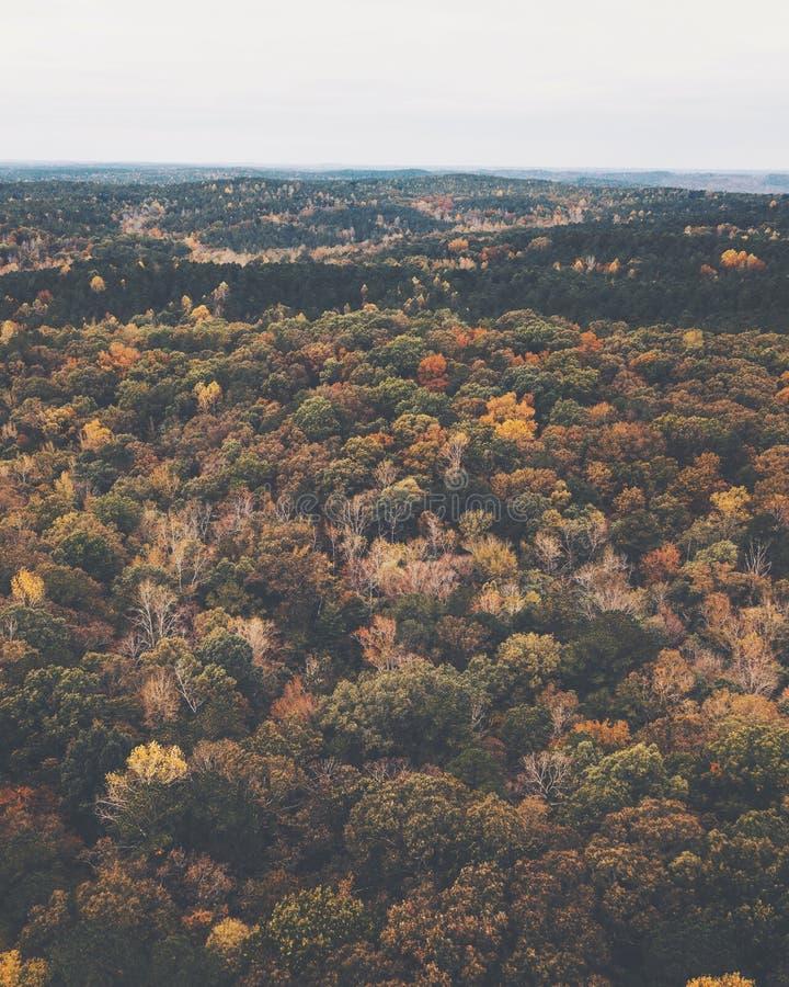 一个多彩多姿的森林的寄生虫图象在有秋叶的美国东南 库存图片
