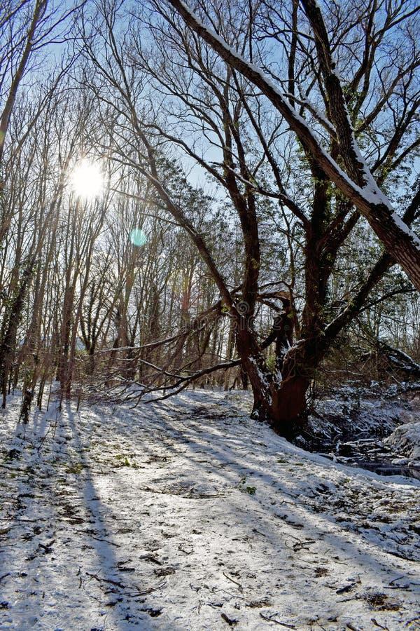 一个多雪的森林地场面 库存图片