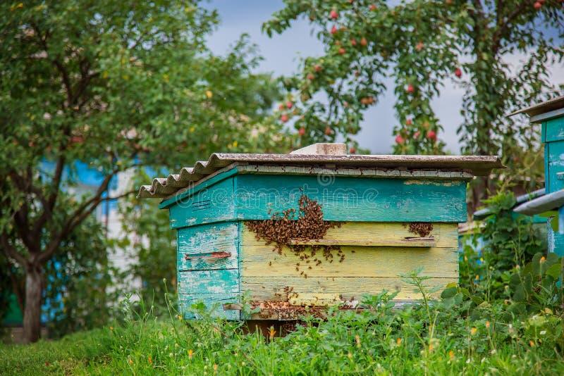 一个小组蜂群在一个老木蜂箱的在农厂庭院里 蜂房,群,保护从风和与好逗留 免版税库存图片