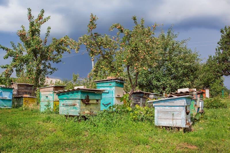 一个小组蜂群在一个老木蜂箱的在农厂庭院里 蜂房,群,保护从风和与好逗留 免版税图库摄影