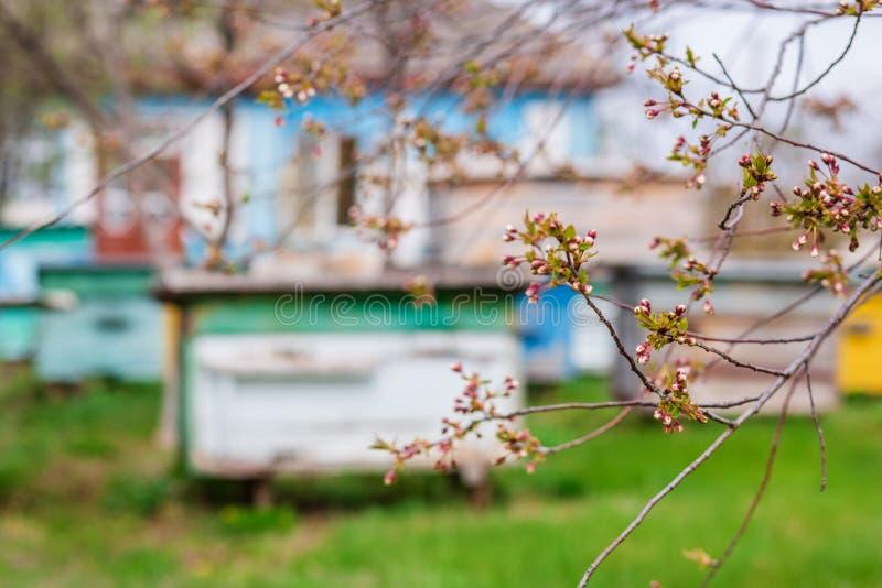 一个小组蜂群在一个老木蜂箱的在农厂庭院里 蜂房,群,保护从风和与好逗留 库存图片