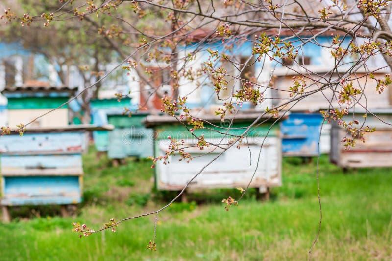 一个小组蜂群在一个老木蜂箱的在农厂庭院里 蜂房,群,保护从风和与好逗留 免版税库存照片