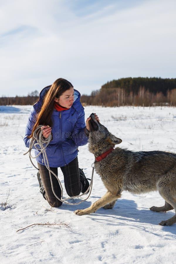 一位女孩教练员和一只灰狼的画象在一个多雪的领域 免版税库存图片