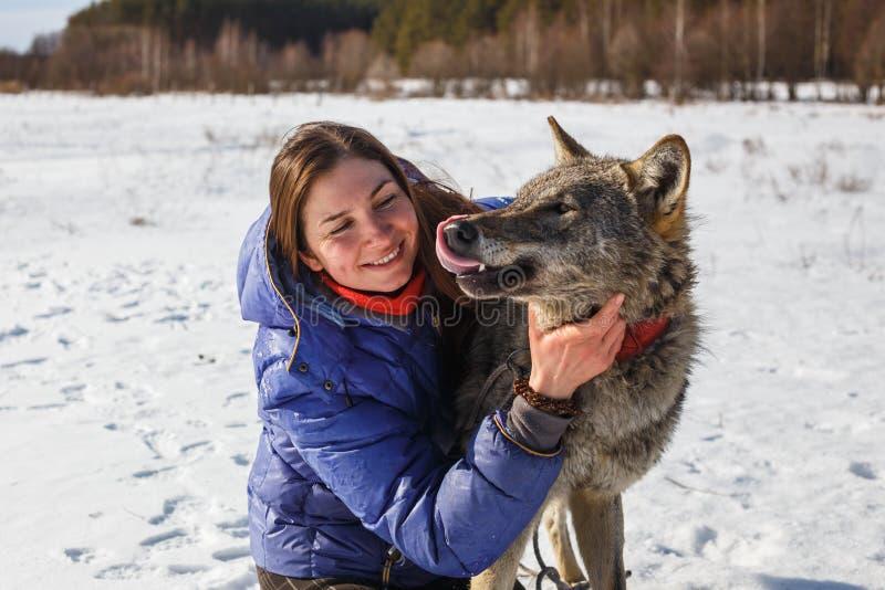 一位女孩教练员和一只灰狼的画象在一个多雪的领域 库存照片