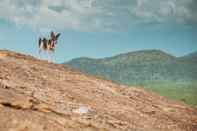 一只流浪狗带领旅客和徒步旅行者一次冒险的在棕色岩石中 免版税库存图片