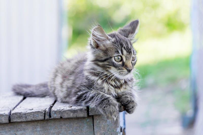 一只灰色镶边小猫坐在street_的一把老椅子 免版税库存照片