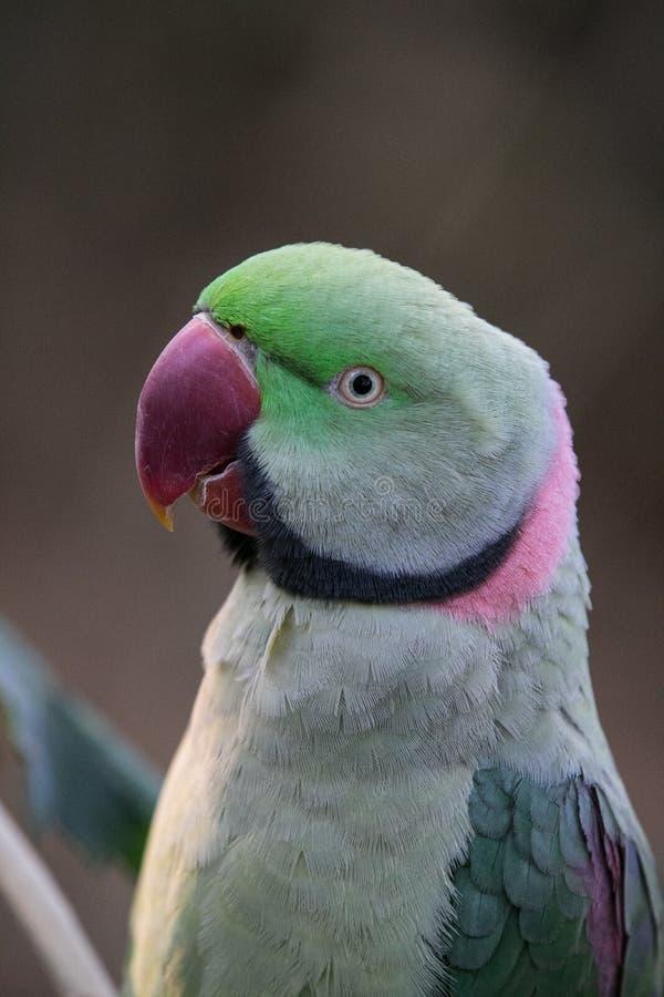一只鸟的五颜六色的画象在Karanji湖的在迈索尔,印度 免版税库存图片