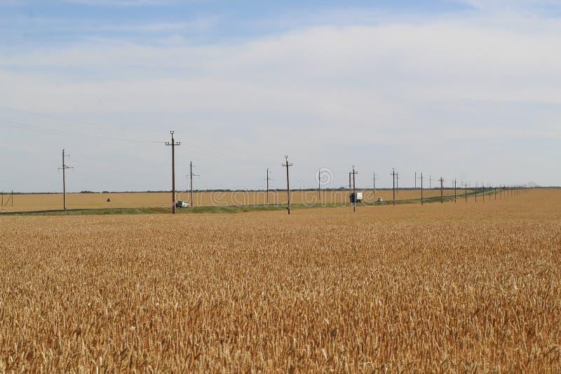 一块麦田在天空蔚蓝和云彩下的在很少驾驶汽车的轨道旁边 库存图片