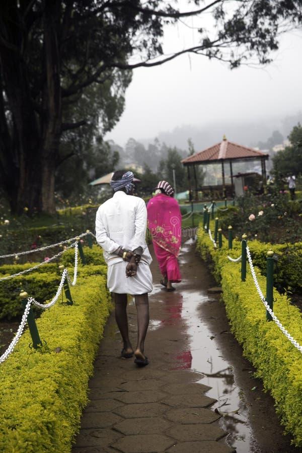 一对美好的夫妇在玫瑰园里在乌塔卡蒙德,印度 库存照片