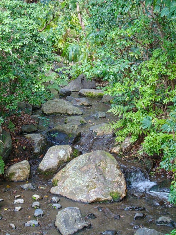一条小河在密林 免版税库存照片