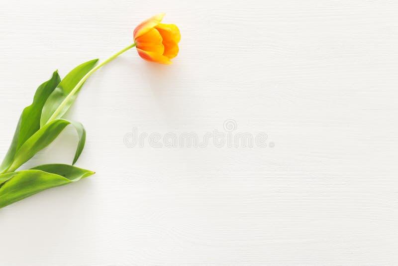 一橙色郁金香花束在淡色白色木背景的 顶视图 免版税库存照片