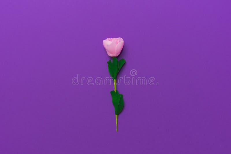 一淡色玫瑰色在框架的中心在明亮的紫色背景的 在视图之上 免版税库存图片