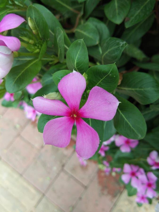 一朵花叶 royaltyfri bild