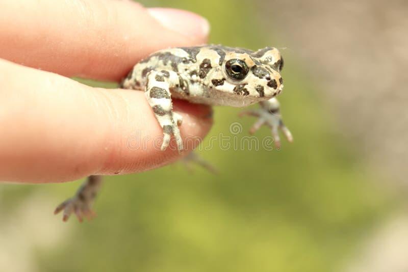 一点与多斑点的皮肤的逗人喜爱的冷的青蛙坐 图库摄影