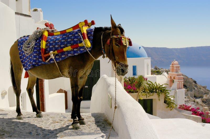 一辆驴出租汽车通过Oia街道在圣托里尼,希腊海岛上的  免版税库存图片