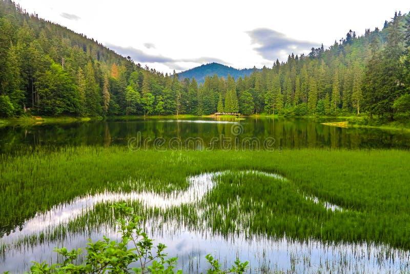 乌克兰喀尔巴阡山脉33 库存照片
