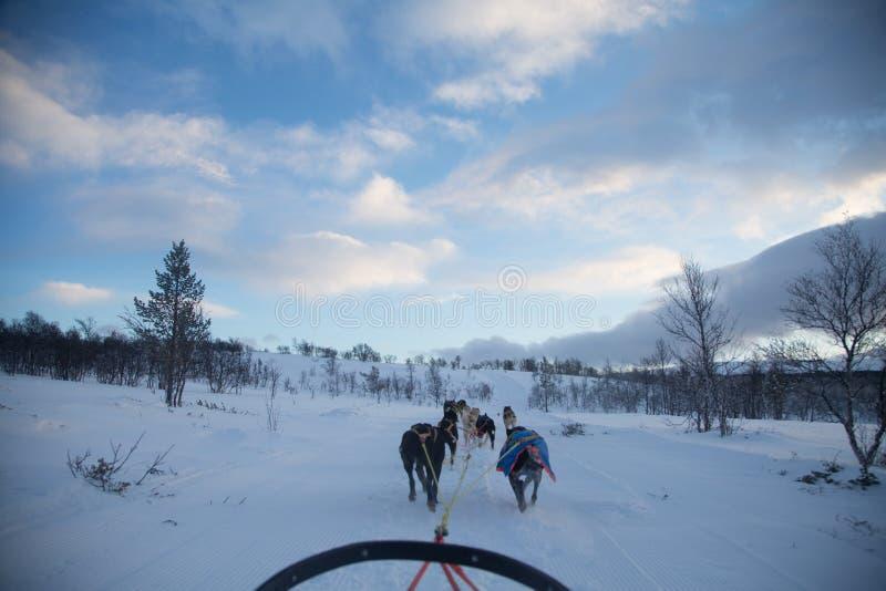 乘坐在冬天风景的扣人心弦的经验一个狗雪撬 斯诺伊森林和山与狗队 免版税库存图片