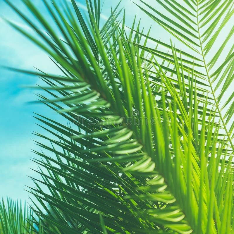 享受一个热带梦想 免版税库存照片
