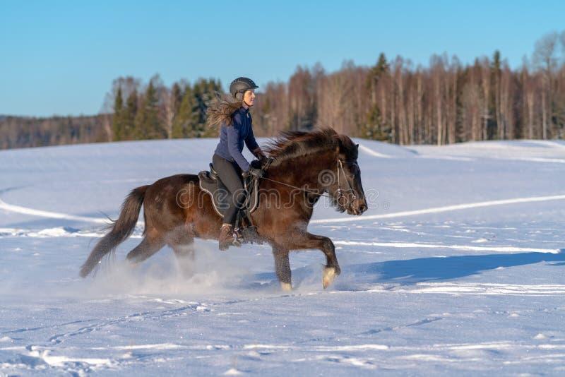 享受在她的冰岛马的年轻瑞典妇女乘驾在冬天 库存照片
