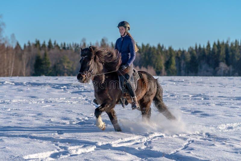 享受在她的冰岛马的年轻瑞典妇女乘驾在深雪 库存图片