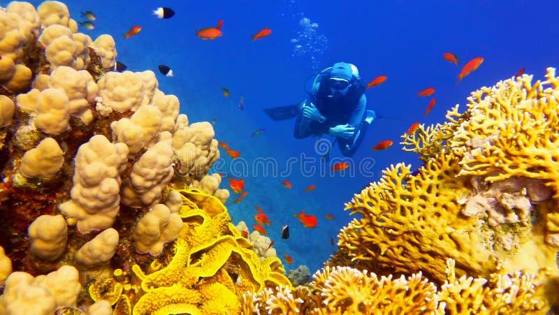 人在美丽的五颜六色的珊瑚礁下的轻潜水员 免版税库存照片
