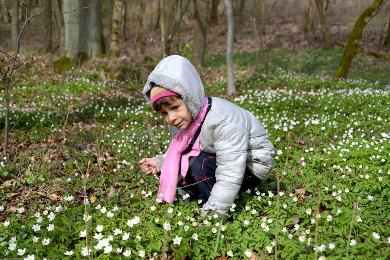 五岁的女孩坐在一朵五叶银莲花中的清洁 春天 免版税库存图片
