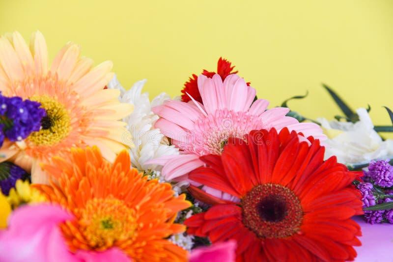 五颜六色的大丁草花春天夏天黄色背景 库存照片