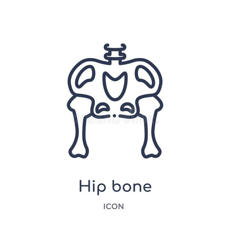 从人体零件概述汇集的线性熟悉内情的骨头象 稀薄的线在白色背景隔绝的熟悉内情的骨头象 熟悉内情的骨头 皇族释放例证