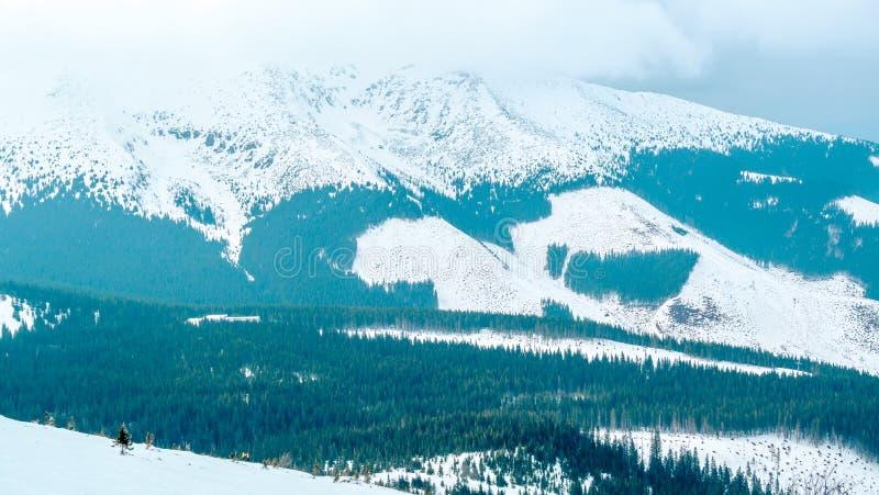 从亚斯娜滑雪场,Chopok montain的冬天视图 免版税库存照片