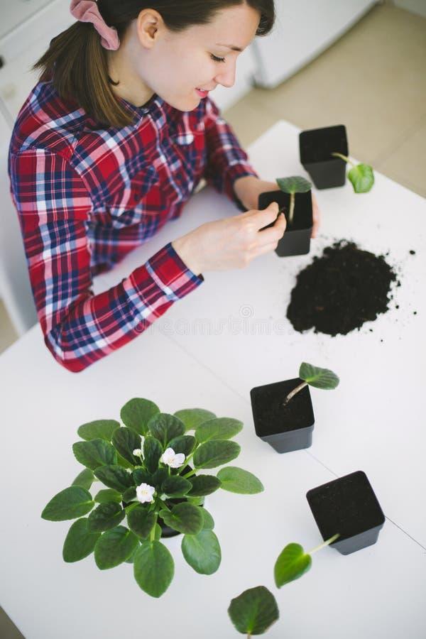 从事园艺妇女的家调迁房子植物 免版税库存照片