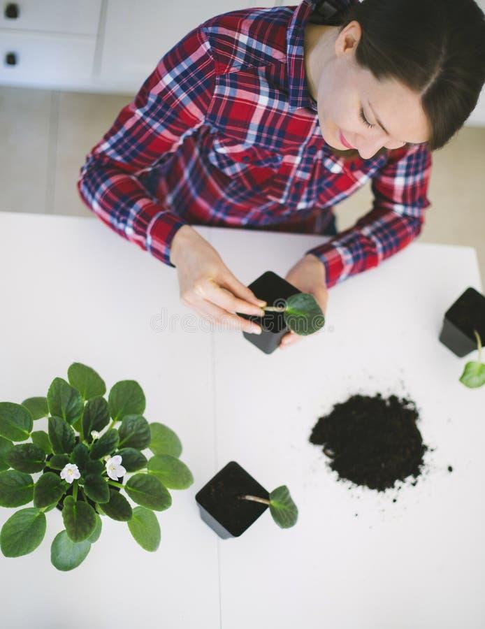 从事园艺妇女的家调迁房子植物 免版税图库摄影