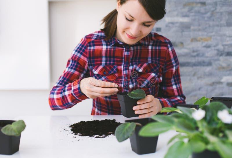 从事园艺妇女的家调迁房子植物 免版税库存图片