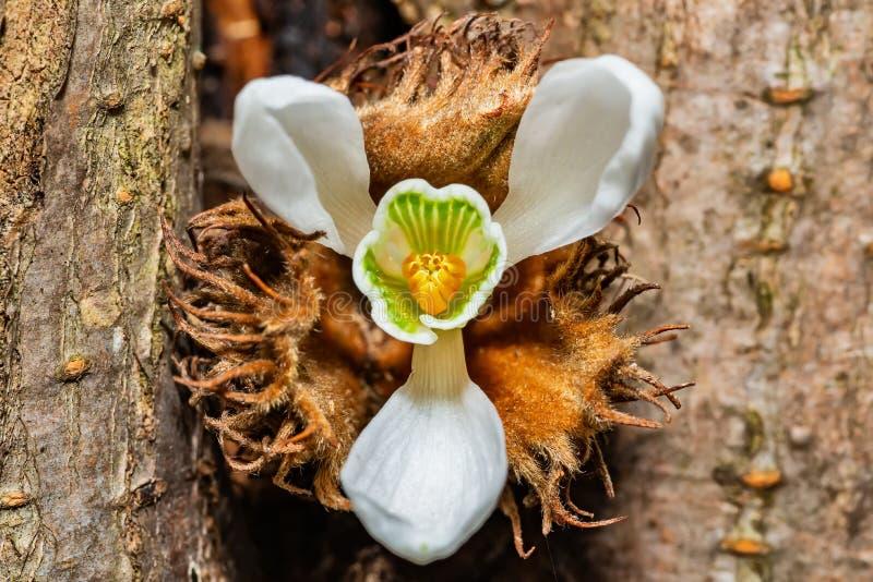 从底部拍摄的第一snowdrops Galanthus nivalis 库存图片