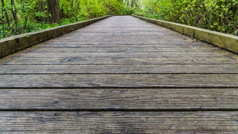 从地面的木小径视图 免版税库存照片