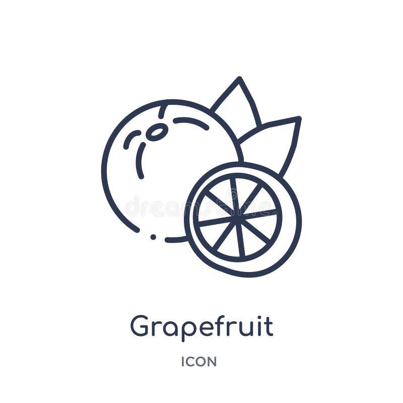 从水果和蔬菜概述汇集的线性葡萄柚象 稀薄的线在白色背景隔绝的葡萄柚象 皇族释放例证