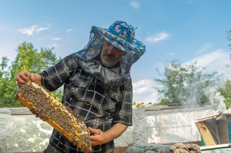 从蜂房的乌克兰农民检查的框架在自己的蜂围场 免版税库存照片