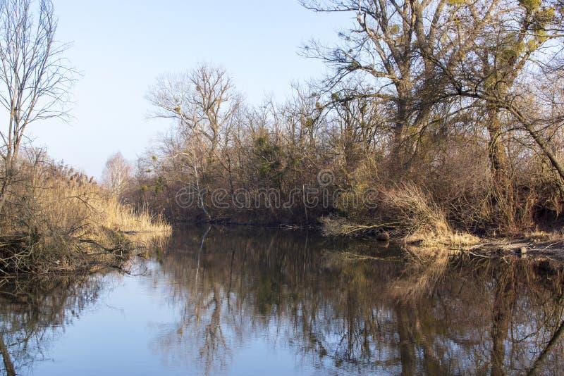 从Szigetköz的自然照片在匈牙利 免版税图库摄影