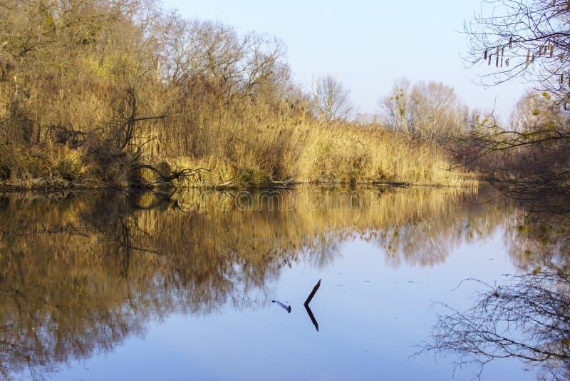 从Szigetköz的自然照片在匈牙利 图库摄影