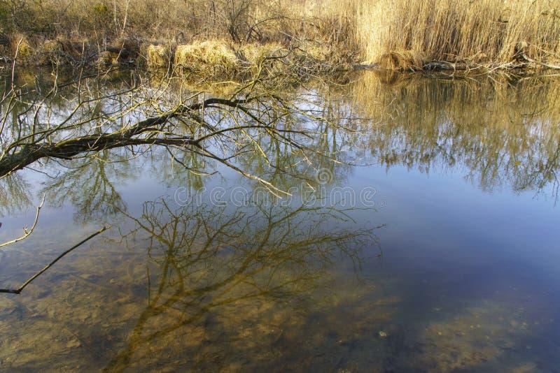 从Szigetköz的自然照片在匈牙利 免版税库存图片