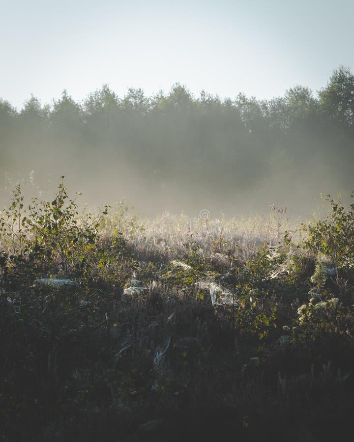 使上升从在地面上的植物模糊在清早阳光下 库存照片