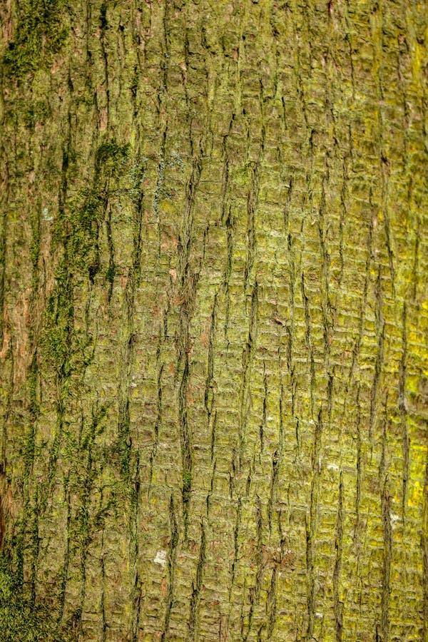 作为背景的棕榈树树干 免版税库存图片