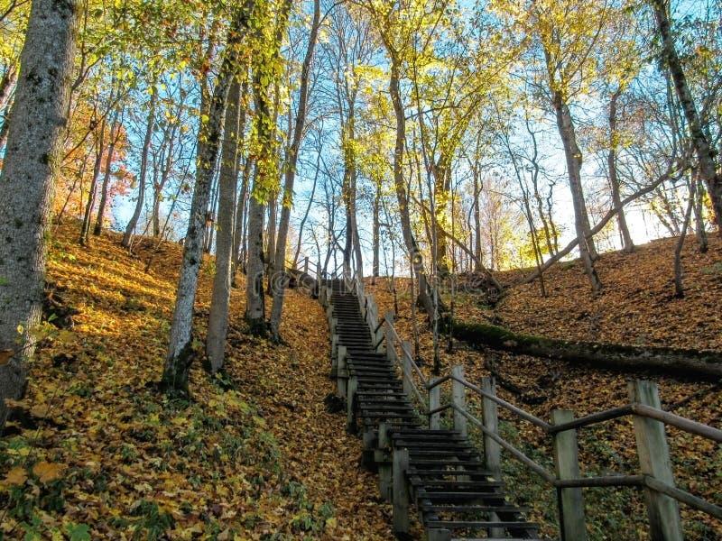供徒步旅行的小道的木步在高亚河河谷,锡古尔达,拉脱维亚 免版税库存图片