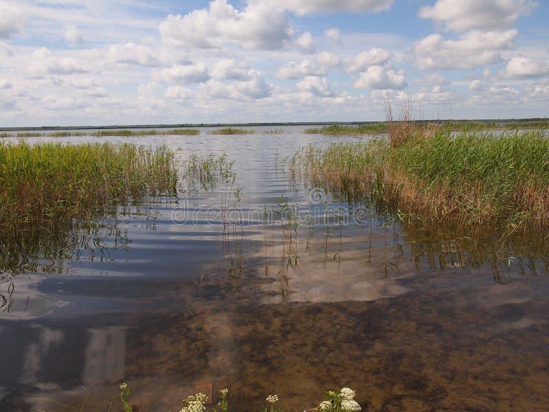Ķemeri国家公园(拉脱维亚) 免版税图库摄影
