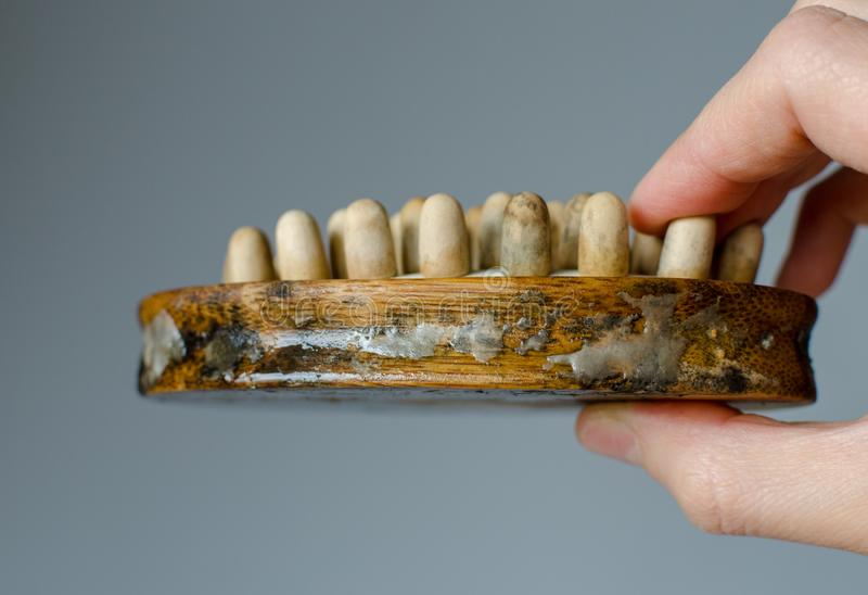 Äckla svampen på kvinnaträmassageborste close upp Huslokalv?rdbegrepp arkivfoto