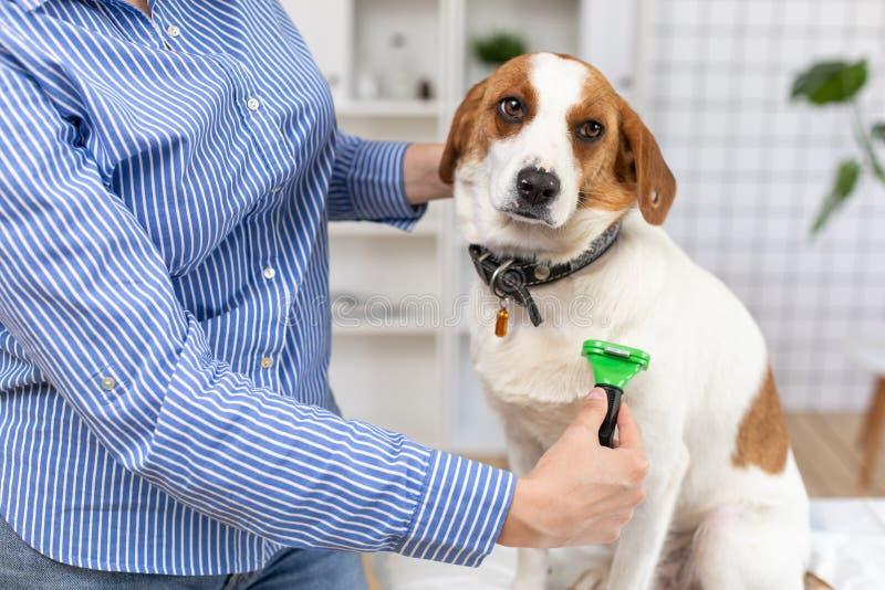 Ägaren kammar hundhåret med en hårkam close upp suddighet bakgrund arkivfoto